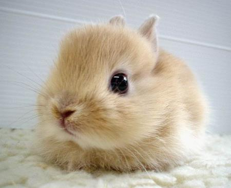 Cute Baby Rabbits