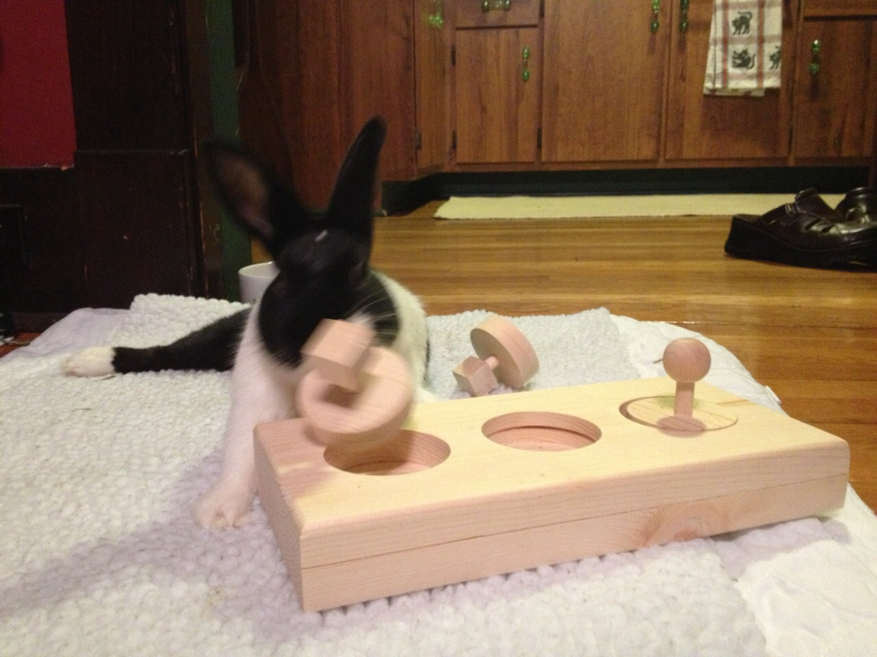 Toys House Rabbit Society