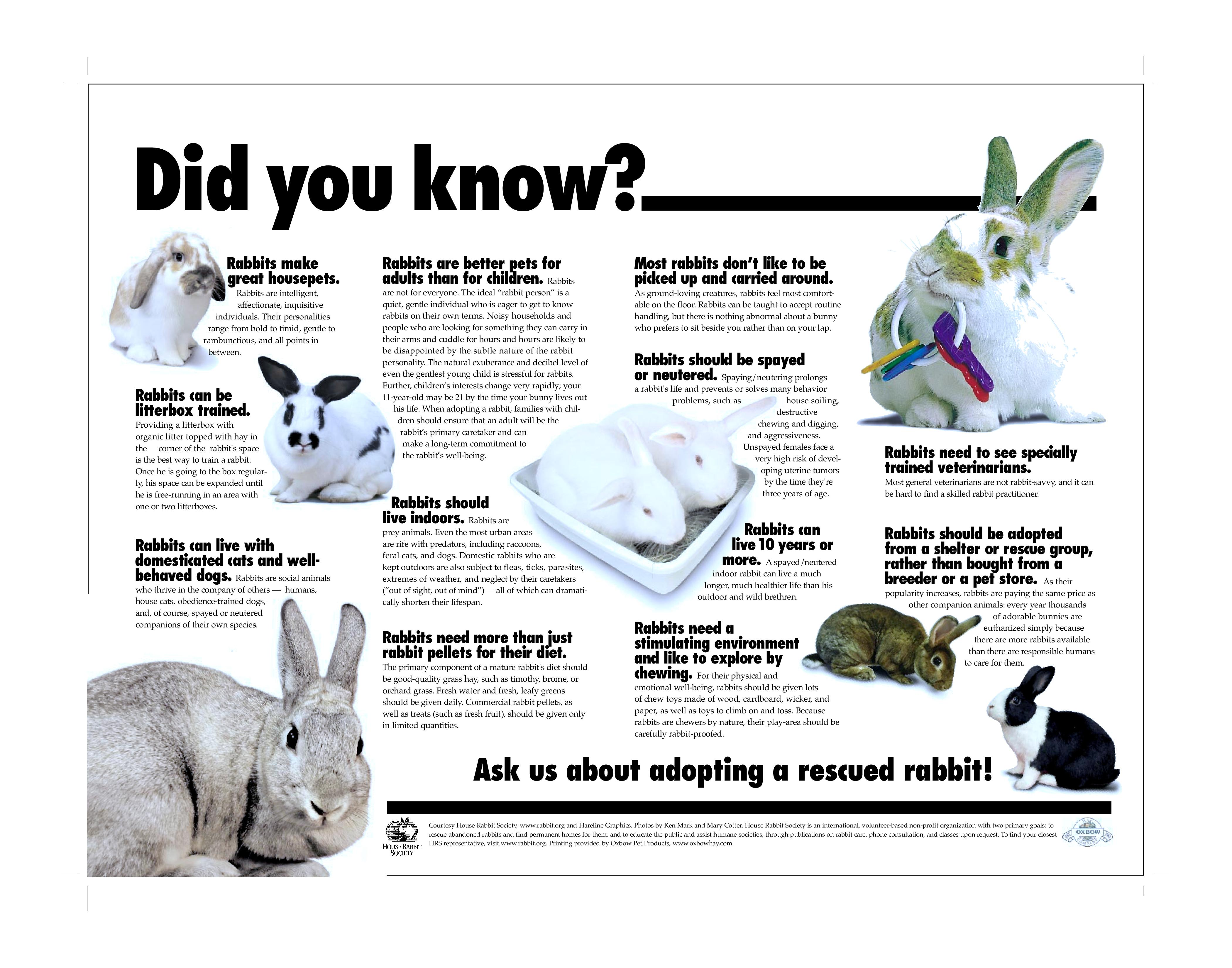"""""""Did You Know"""" Poster for Shelters and Rescue Groups ..."""