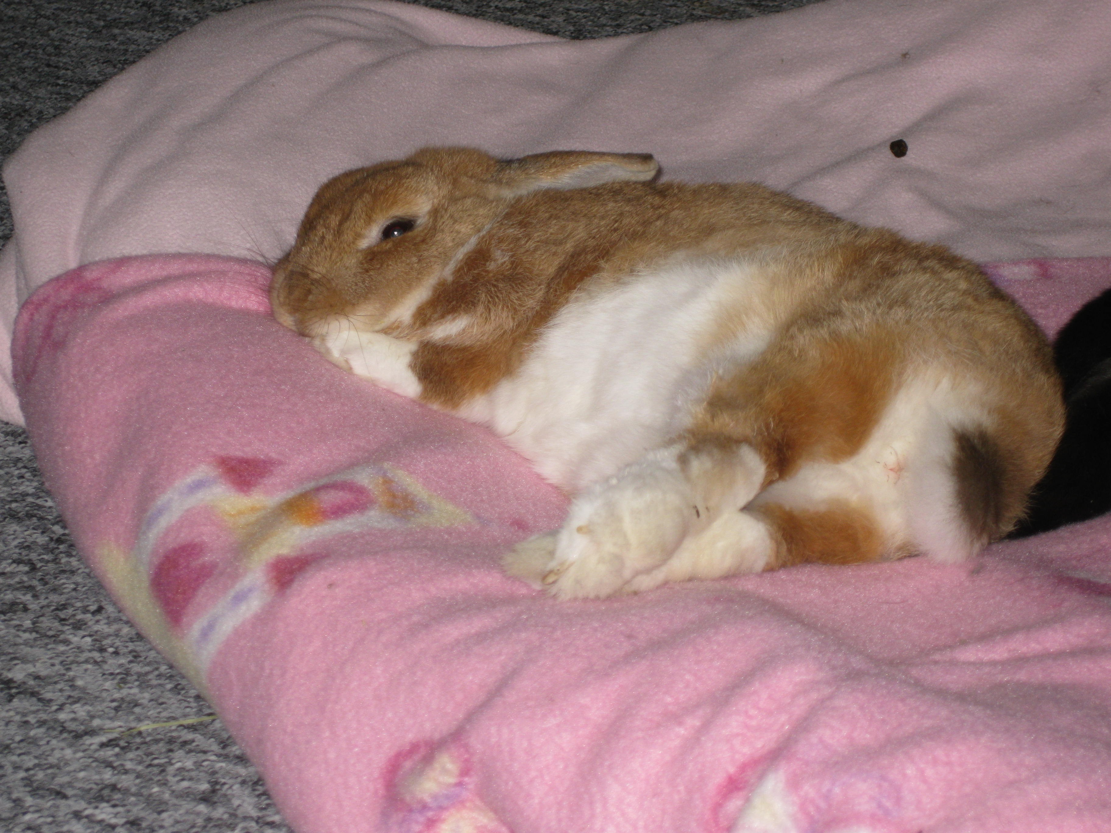 Color Therapy: A Gentle Way to Help Heal and Support Our Rabbits ...