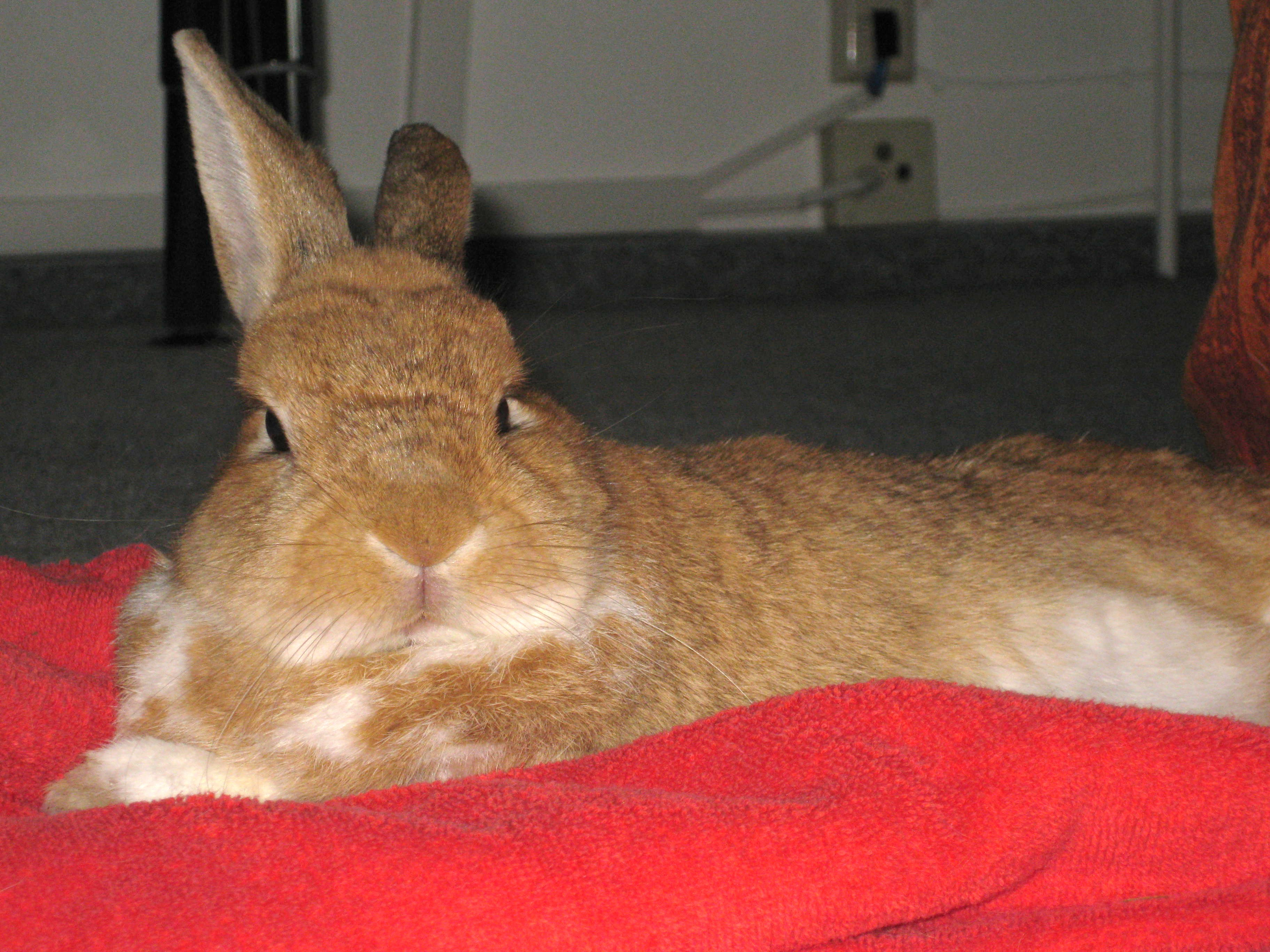 Color Therapy A Gentle Way to Help Heal and Support Our Rabbits ...