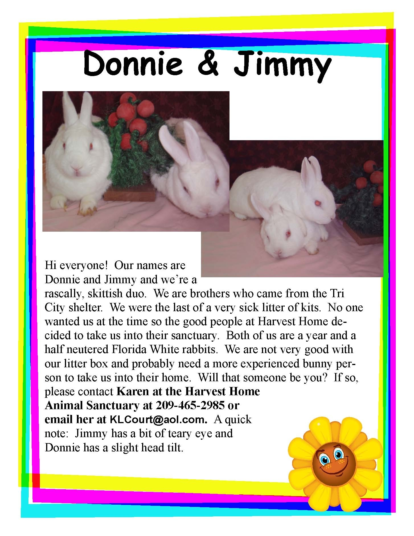posters and flyers from hrs and our partners house rabbit society howtoadoptabunnyposter sample flyer hayward shelter