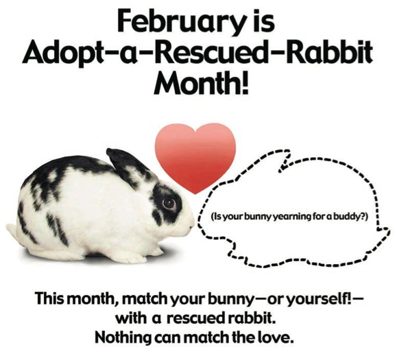 February is Adopt a Rescued Rabbit Month!