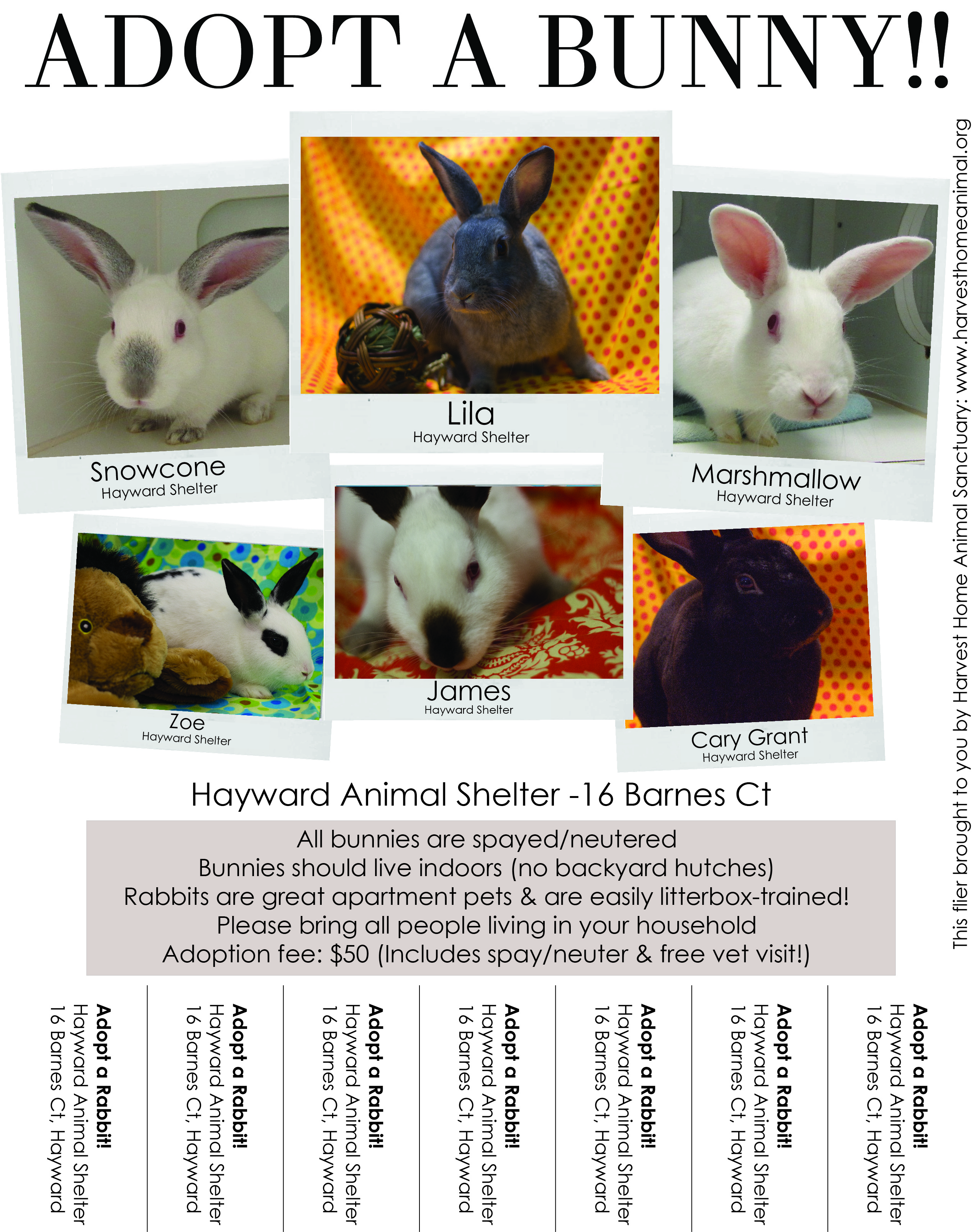 posters and flyers from hrs and our partners house rabbit society