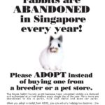 adopt_instead_buying-page-001