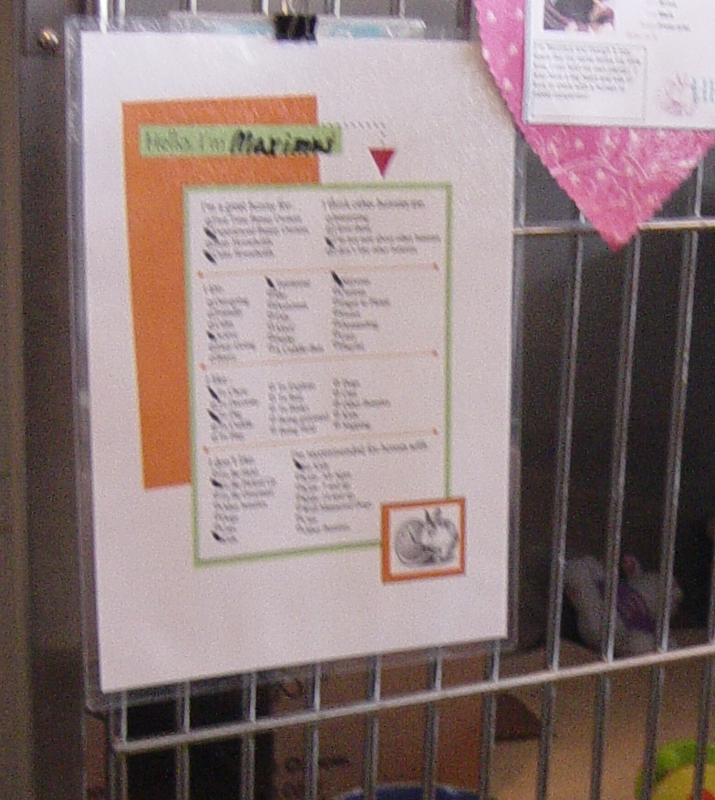 Adopting Out Rabbits In The Animal Shelter House Rabbit
