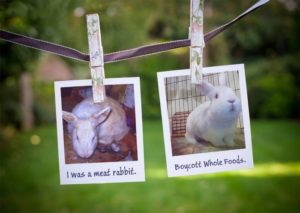 Image courtesy of Amy Litchfield-Kennedy and Sweet Binks Rabbit Rescue