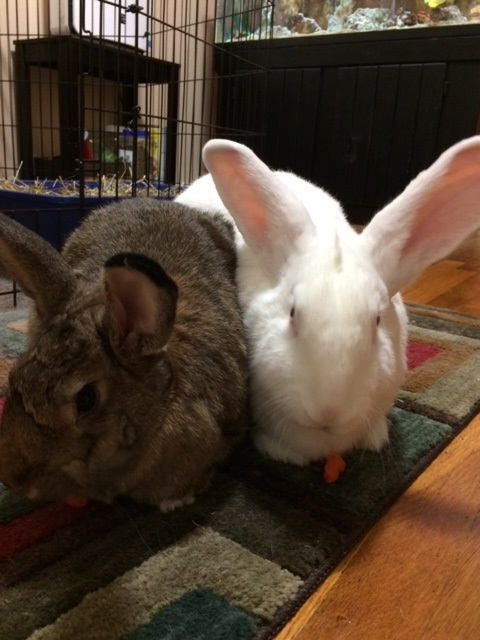 Frequently Asked Questions House Rabbit Society | Autos Post