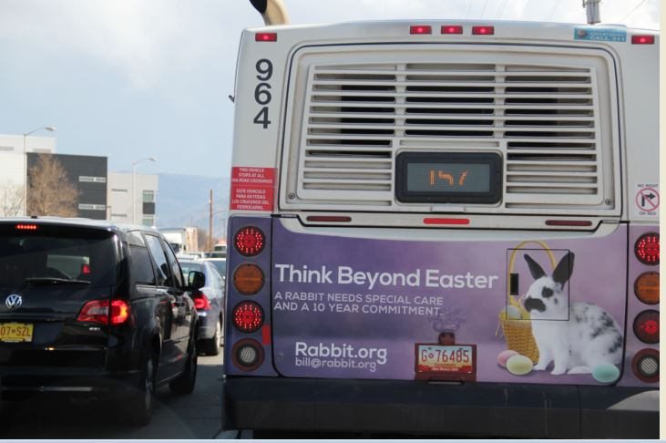 New Mexico House Rabbit Society Gets Our Easter Message Out on Buses!