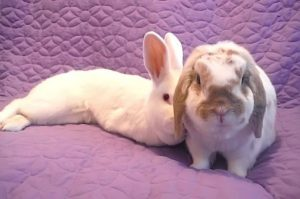 lacey_and_thumper