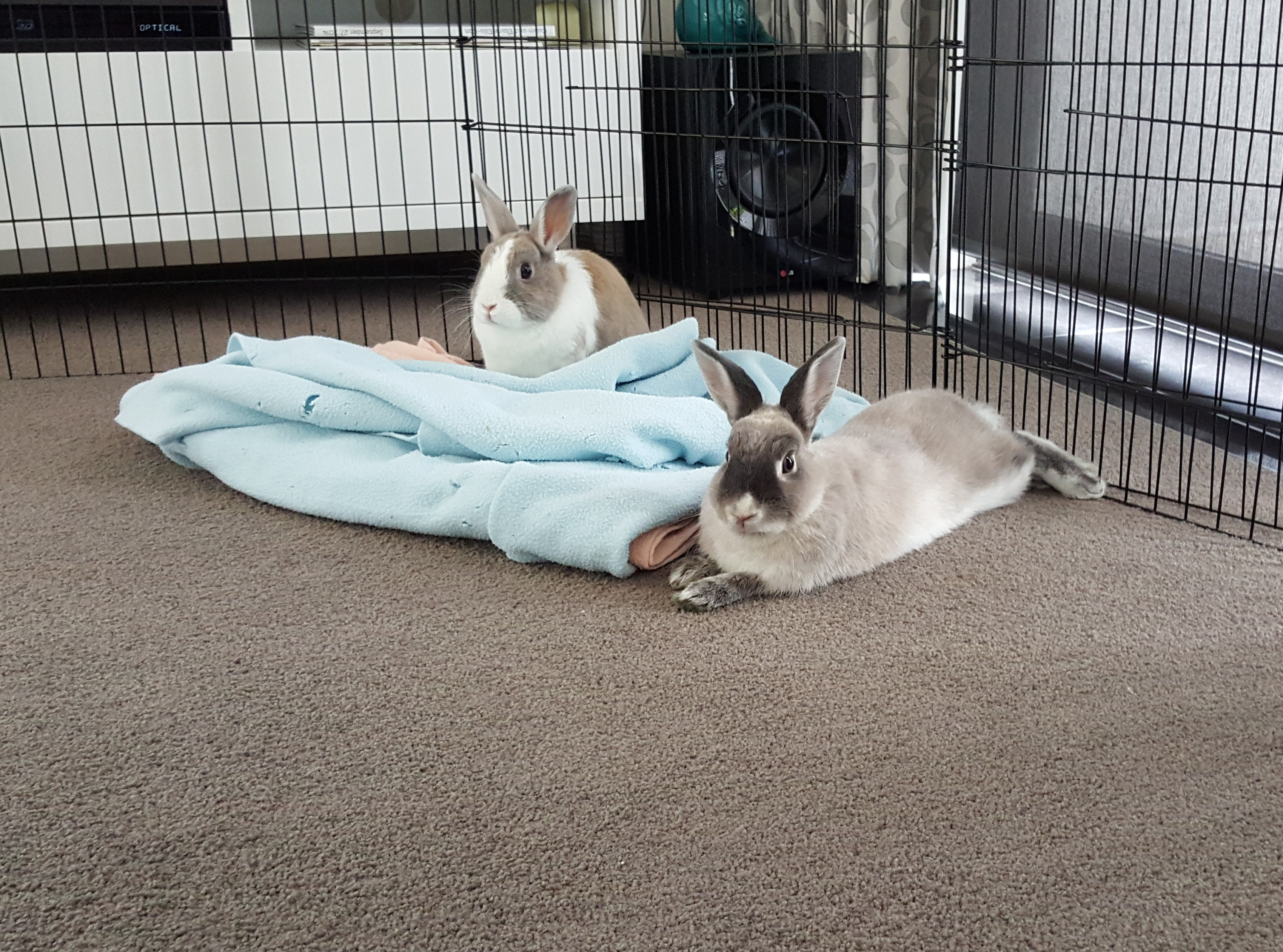 Bonding Rabbits: A How to from Georgia HRS