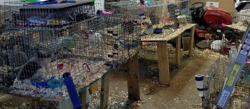 65 rabbits desperately need help in pittsburgh area