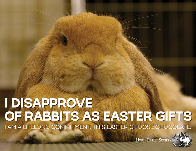 Why not buy a rabbit for easter house rabbit society why not buy a rabbit for easter negle Images