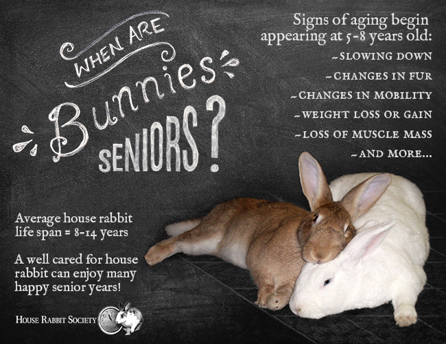 Signs Of Aging House Rabbit Society