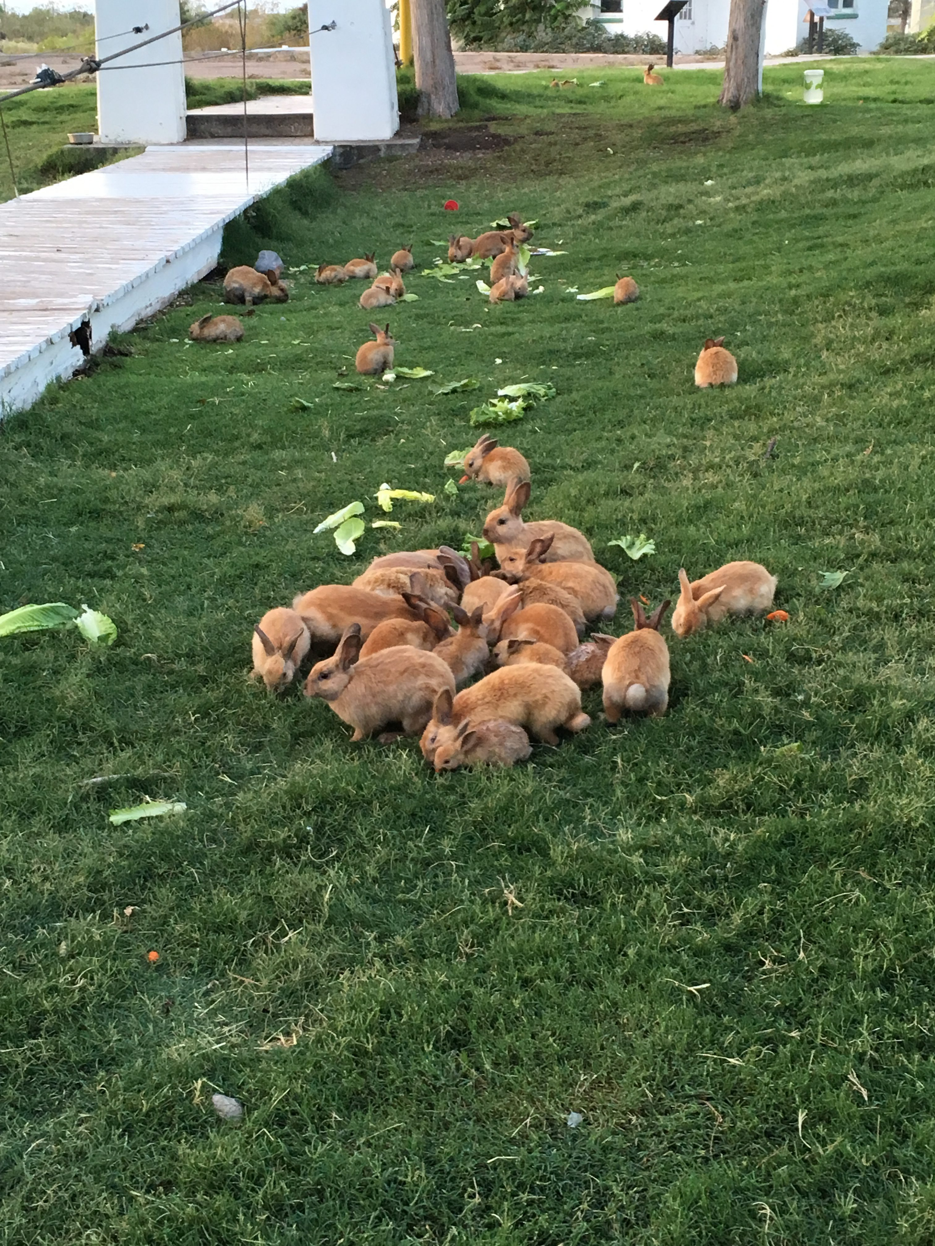 Two New Emergency Rescue Grants Go To Nevada And Iowa House Rabbit
