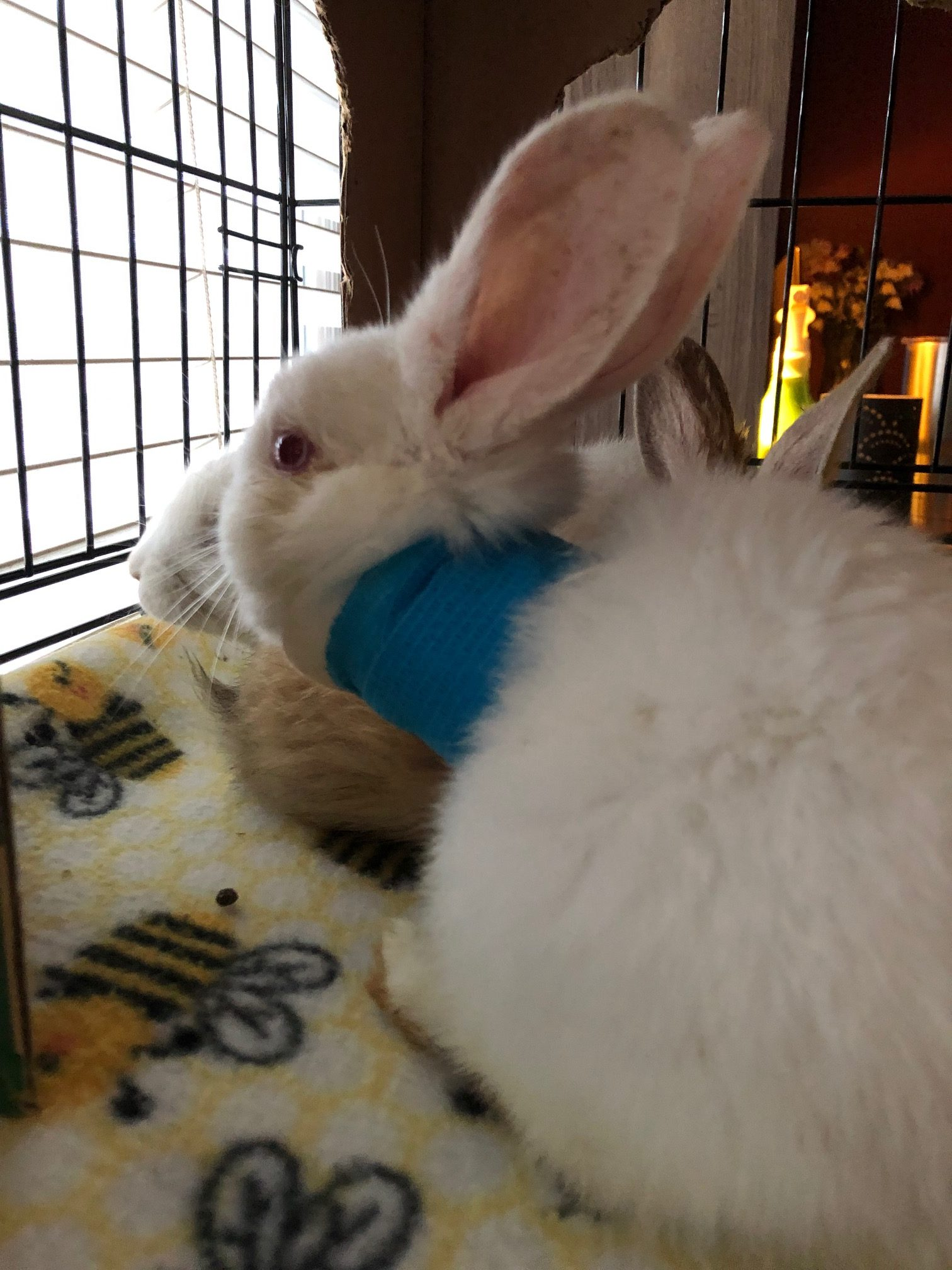 Latest Emergency Rescue Grant goes to Bunny Burrow of Texas