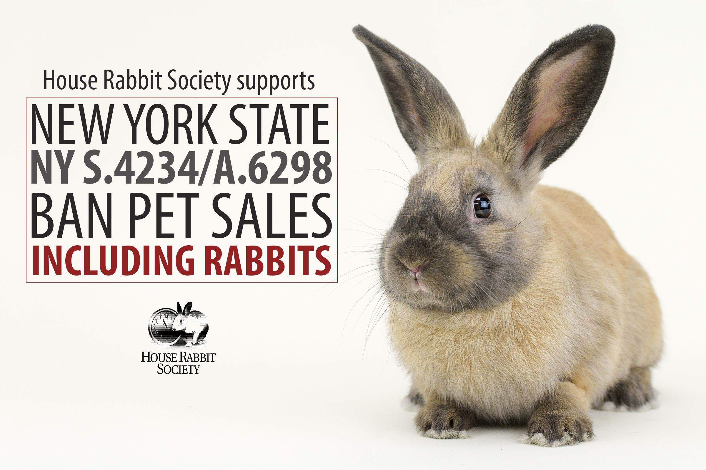 HRS Supports Ban on Pet Store Sales of Rabbits, Cats, and Dogs – NY S.4234/A.6298
