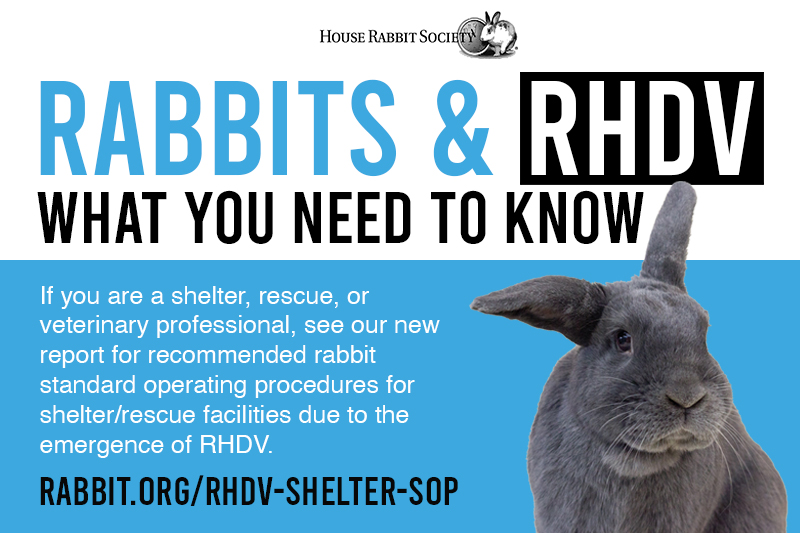 Rabbits & RHDV: What you need to know