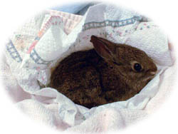 Rabbit Milk Replacer Recipe