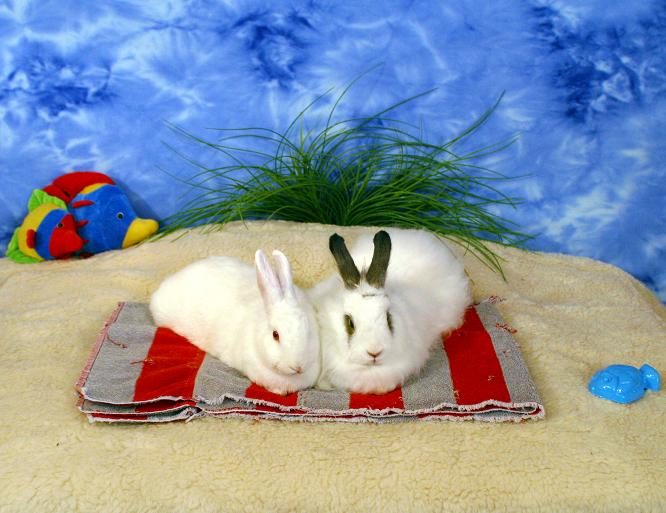 What S Popular At Rabbit Org