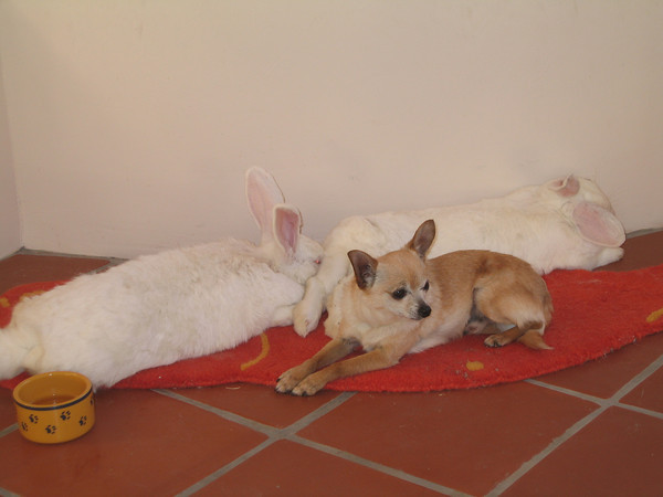 When Fido Met Thumper (Dogs and Rabbits)