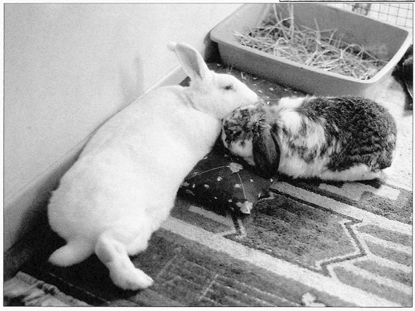 Elderbuns House Rabbit Society