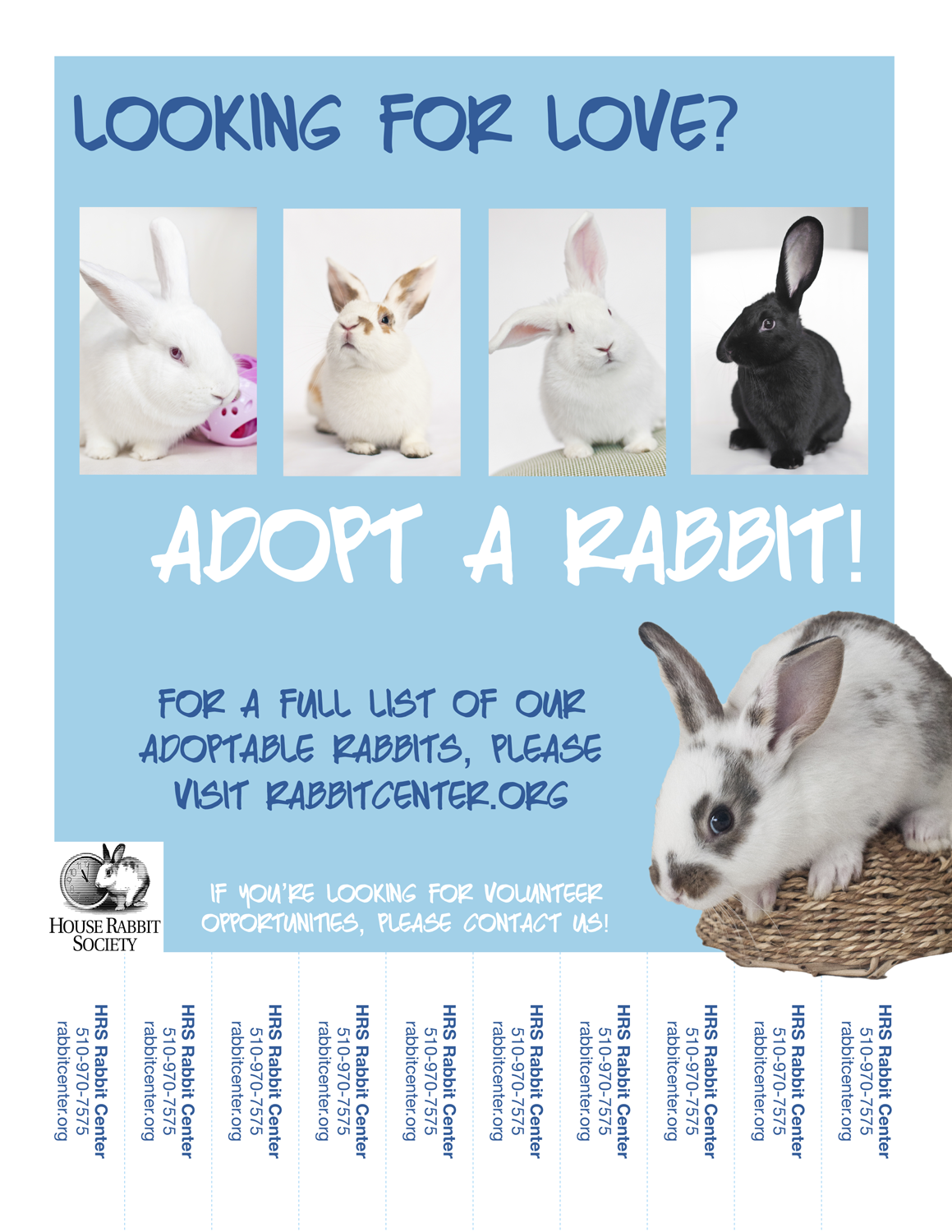 volunteer house rabbit society adoption and education center team create online print listings for adoptable rabbits and upcoming events at hrs graphic design for fliers and handouts distributing flyers