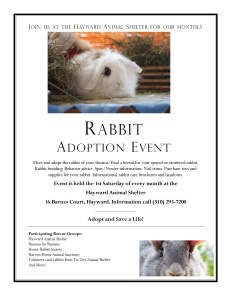 Rabbit Adoption Event - Hayward Animal Shelter @ Hayward Animal Shelter | Hayward | California | United States