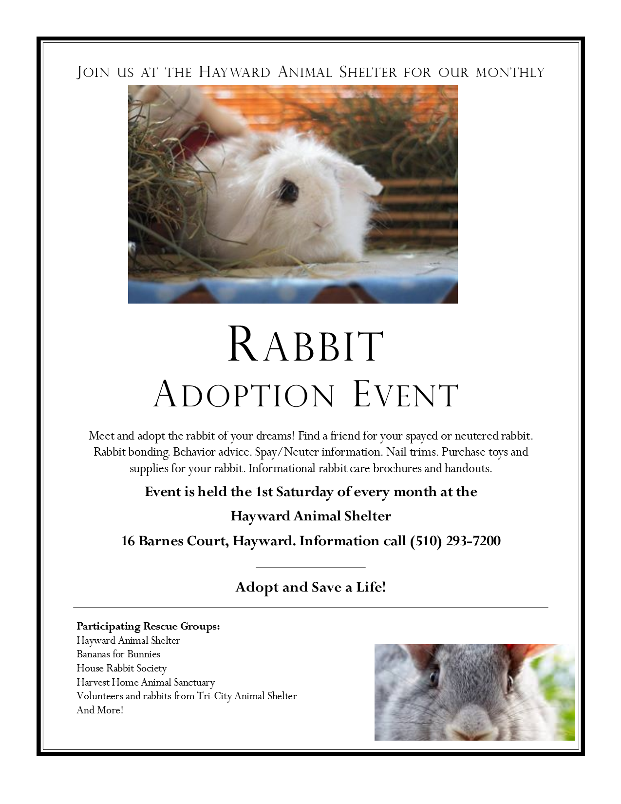 hayward rabbit event