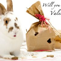 Help House Rabbit Society give two hundred shelter bunnies a valentine!