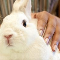 Part II – The Well-Maintained Bunny: Hands-on Class – Sunday, June 9th 1-3pm