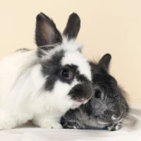 Streaming Bunny Cam with Animal Planet L!VE