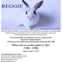 Rabbit Adoption Event – December 6th