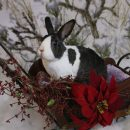 Join us for the House Rabbit Society Holiday Party and Celebration of our 25th Anniversary!