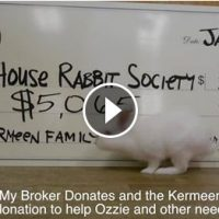 Bunnies Helped by Buying a House!
