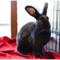 Some Bunny to Love: Post-Valentine's Day Mobile Adoption at the El Cerrito Plaza PETCO on 2/19