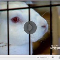 House Rabbit Society on TV!