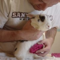 Hands-on Bunny Care Class on 10/28