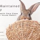 August 18 – Basic Health Care Bunny Class