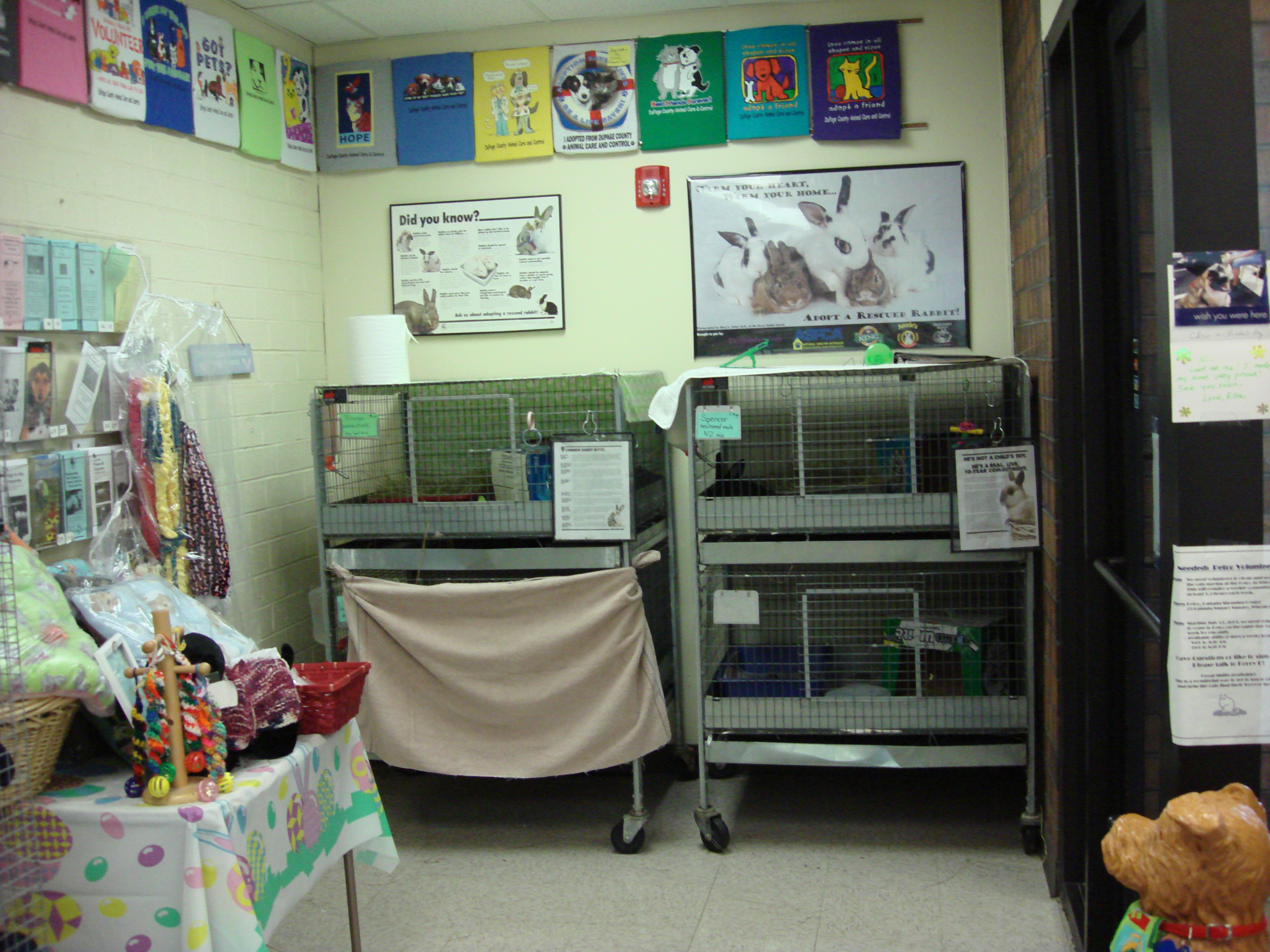 Lobby Cages at DuPage County Animal Care and Control