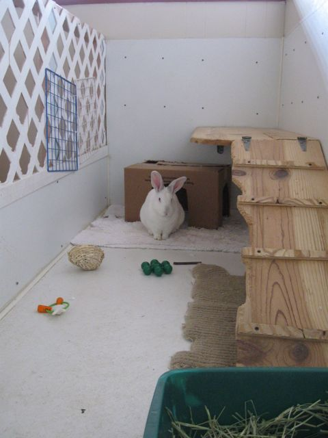 Habitat at the HRS Rabbit Center