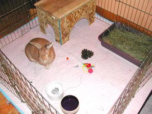 Ex Pen At San Go Humane Society Rabbit