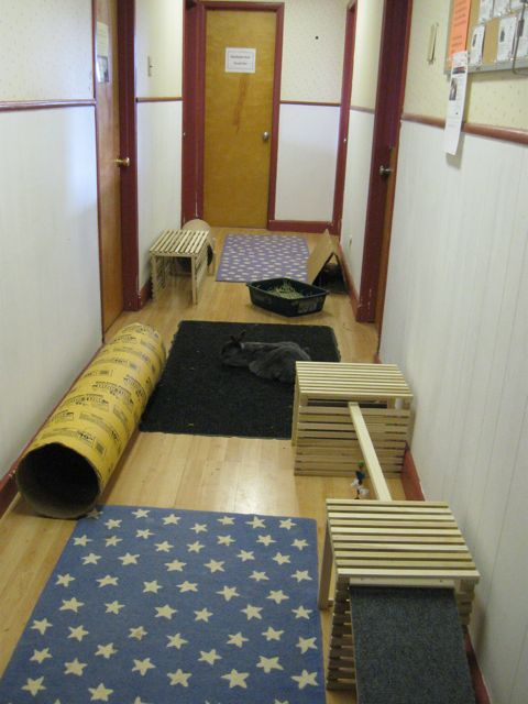 Play Hallway at the HRS Rabbit Center