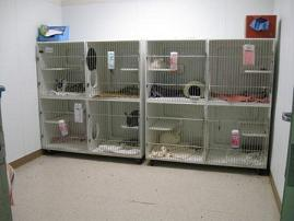 Rabbit Room at Hayward Animal Shelter