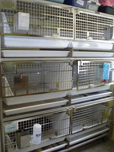 Cages at Baltimore Humane Society