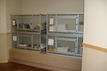 Built in Cages at San Diego Humane Society