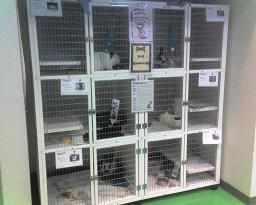 Cages at Albuquerque Animal Service's Off Site Adoption Facility